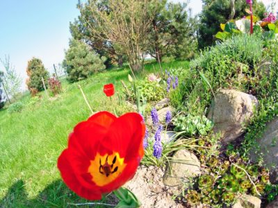 zahradní skalka