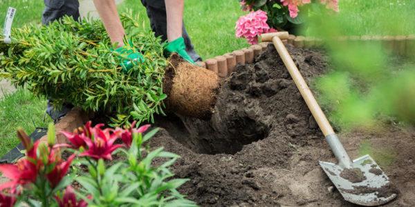 starostlivost o zahradu